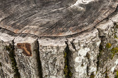 Walnut weathered log detail Royalty Free Stock Photography