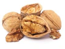 Walnut. On a white background Royalty Free Stock Photos