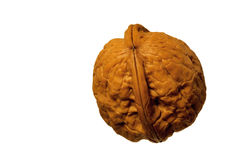 Walnut on white. Detail view of walnut on white background Royalty Free Stock Image