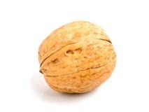 Walnut. The walnut on the white isolated background Royalty Free Stock Image