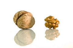 Walnut on white. Walnut kernel and in shells with reflection on white isolated background Stock Photo