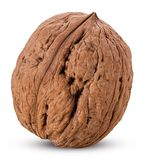 Walnut whole. Isolated on white background. Clipping Path. Full depth of field stock photography