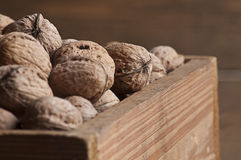 Walnut in wooden box Stock Images