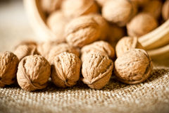 Walnuts. Series of organic and fresh walnuts stock photography