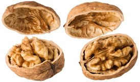 Walnuts. Opened walnuts isolated on white background Stock Photos