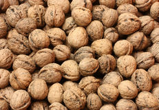 Walnuts. Background of a lot of walnuts Stock Photography