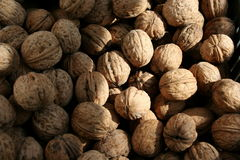 Walnuts. Many walnuts with nice shadows stock image