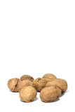 Walnuts. Still life of walnuts on white background Royalty Free Stock Photography