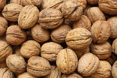 Walnuts. Pile of the walnuts - close-up view royalty free stock images