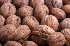 Walnuts. Close-up of a walnuts Stock Image