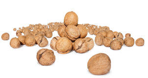 Walnuts. Isolated on white background, Many full brown Royalty Free Stock Photography