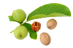 Walnuts. With leaves on a background of rough cloth Royalty Free Stock Image