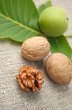 Walnuts. With leaves on a background of rough cloth Royalty Free Stock Photography