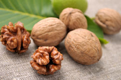 Walnuts. With leaves on a background of rough cloth Stock Photos