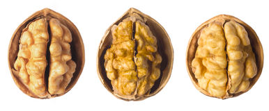 Walnuts. Close up of walnuts on white Stock Photos
