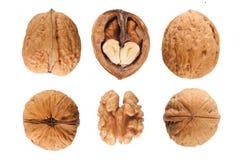 Free Walnuts Royalty Free Stock Photo - 22287845