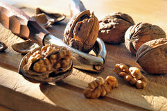 Free Walnuts Stock Photo - 22558780