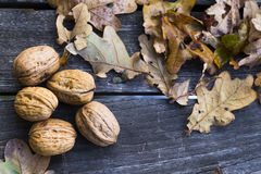 Walnuts. On old wooden table with brown leafes Royalty Free Stock Photography