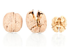 Walnuts. On a reflective white background Stock Photography