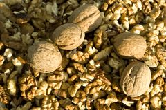 Walnuts. Close-up on wallnuts - healty and nutritious food Royalty Free Stock Image