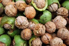 Walnuts. Closeup view of Fresh Walnuts Royalty Free Stock Photography