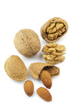 Walnuts and almonds. On a white background stock images