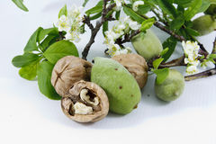 Walnuts and almonds Royalty Free Stock Images