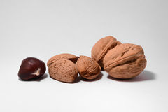 Walnuts, almonds and chestnuts. Some walnuts, almonds and chestnuts on white background Stock Images
