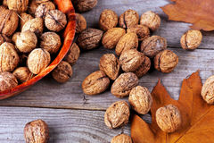 Walnuts amidst autumn leaves Royalty Free Stock Photography