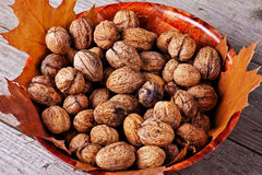 Walnuts amidst autumn leaves Stock Images