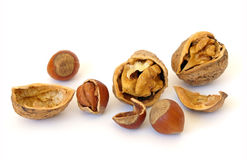 Walnuts And Hazel Stock Images