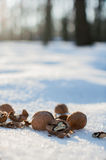 Walnuts for animals in the park on winter Royalty Free Stock Photos