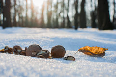 Walnuts for animals in the park on winter Royalty Free Stock Images