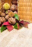 Walnuts and autumn foliage Royalty Free Stock Images
