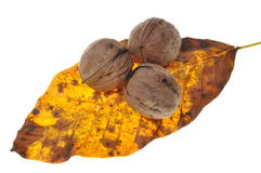 Walnuts on the autumn leaf Stock Image