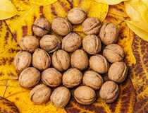 Walnuts and autumn leaves Royalty Free Stock Photography