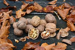 Walnuts and autumn leaves stock photography