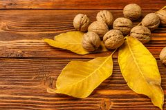Walnuts with autumn yellow walnut leaves against the background of an old wooden table. Stock Image
