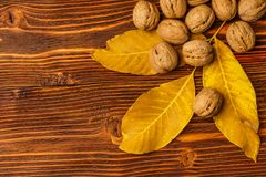 Walnuts with autumn yellow walnut leaves against the background of an old wooden table. Royalty Free Stock Photo