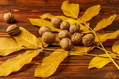 Walnuts with autumn yellow walnut leaves against the background of an old wooden table. Stock Images