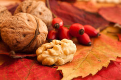 Walnuts on autumnal leaves Royalty Free Stock Photos