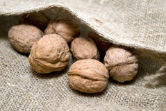 Walnuts in the bag. Walnuts in the burlap bag Royalty Free Stock Photography