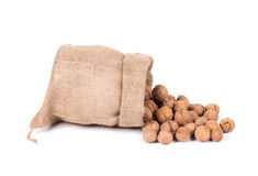 Walnuts in a bag. Stock Photos