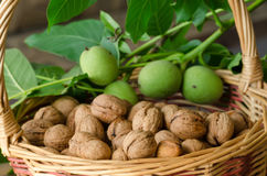 Walnuts in basket Stock Image