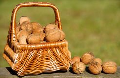 Walnuts in basket. On green background royalty free stock photography