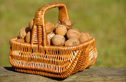 Walnuts In Basket. On green background stock photo
