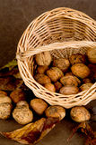 Walnuts Basket - 01 Stock Photography