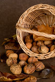 Walnuts Basket - 04 Stock Images
