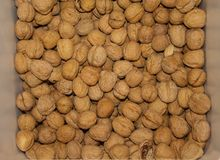 Walnuts. Bin filled with uncracked walnuts in their shells royalty free stock photo