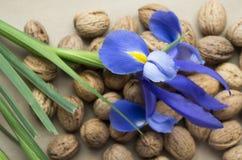 Walnuts and blue wild iris Stock Photo
